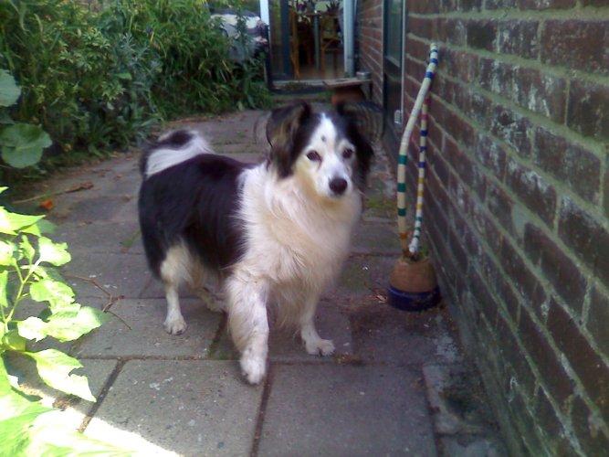 skippy's laatste foto