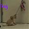 puppy prodigy