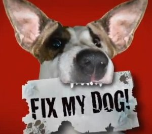 Fix my dog